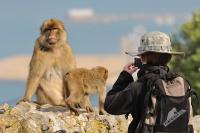 Makak magot - Macaca sylvanus - Barbary Macaque